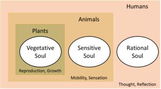 Types of Souls